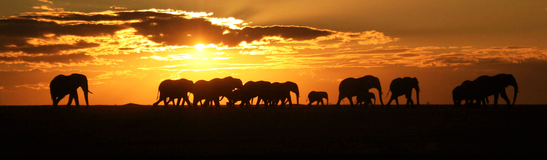 Troop-of-elephants